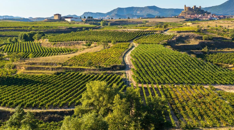 viñedo la rioja 1170x650 - Enoturismo: Vendimia en la Rioja